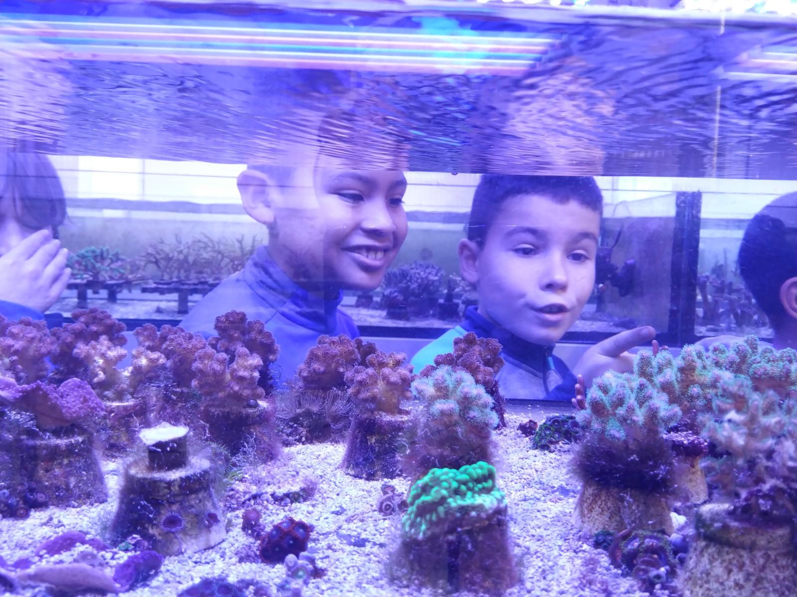 O CEIP 1 de Foz visita a granxa de corais Reef Water